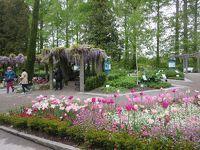 花のマイナウ島とアルザス地方・黒い森・スイスを巡る8日間+1日☆その2☆マイナウ島~ボーデン湖に浮かぶ花の楽園(^^)/