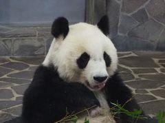 王子動物園のタンタンとズゼ