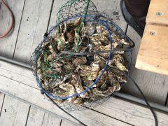 牡蠣食べ放題ツアー