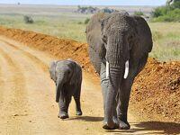 タンザニアで4国立公園を巡るサファリ