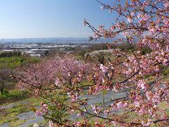 「太田・河津桜の里」の河津桜_2020_まだ3分咲きくらい、遅めです.(群馬県・太田市)