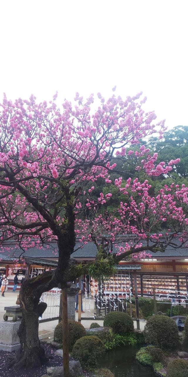 福岡グルメを堪能しに、二泊三日で福岡へ。<br />オシャレなカフェが意外に多かった!!