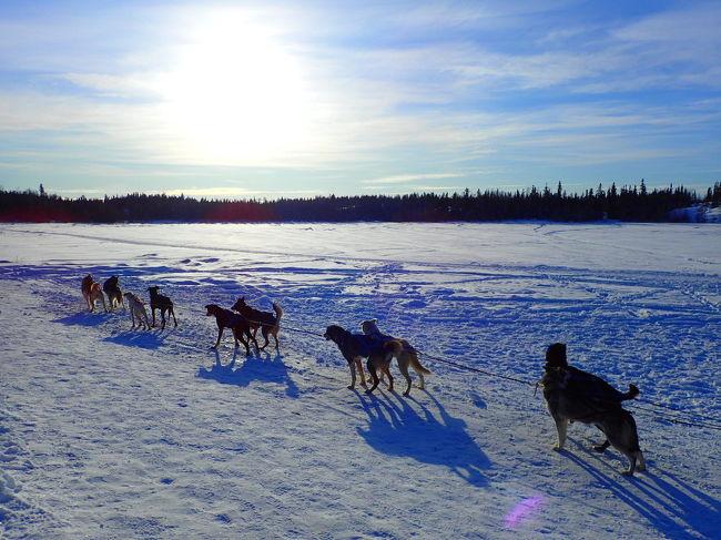 イエローナイフ 人生初のオーロラ(3)昼も夜もオーロラビレッジ 犬ぞり初体験