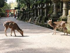 こんな時期にバスツアー!? 鹿と遊んで、春日大社&月ケ瀬梅渓♪