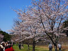 桜の皇居乾通りと東京・丸の内