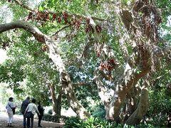 南アフリカ 「カーステンボッシュ国立植物園」
