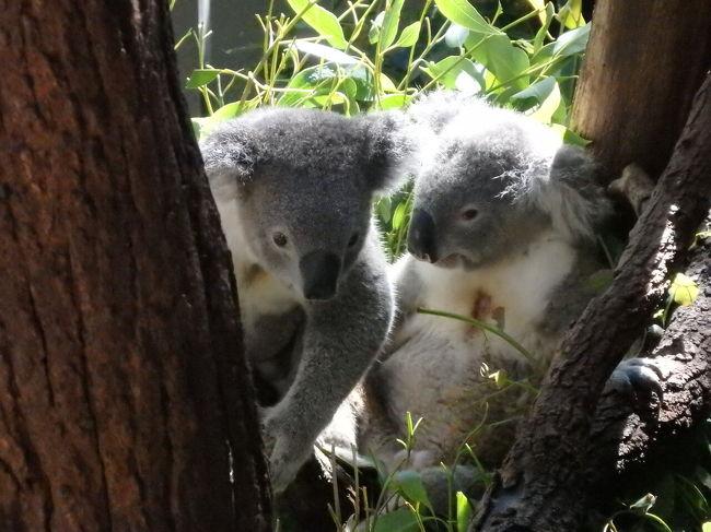 シドニー二日目 タロンガ動物園