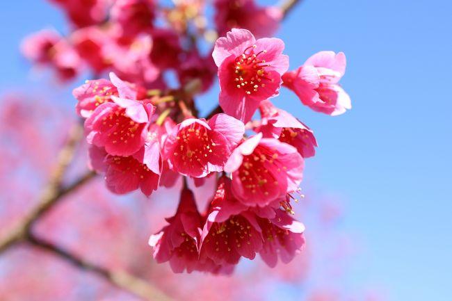 現在、新型コロナ予防で在宅勤務中。従って、安易に外出などできません。逆に、一日が長~く感じて、精神的・肉体的にストレスが溜まってきます。普通に通勤・出勤していることが、いかに健全であるかを知らされます。<br /><br />そういうことで、今日は在宅勤務中の有給休暇取得です。幸い、今日の東京は4月下旬の陽気でお出かけにはもってこい。3月11日、東日本大震災慰霊日にその事を思いながら、皇居ラン、いえウォーキングをして来ました。<br />