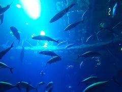 2020年、初めての冬の沖縄。2日目。フクギとフルーツらんどと美ら海水族館。