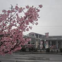 2019冬・平成最後の四国旅(パート4:高知市内→室戸→宍喰)
