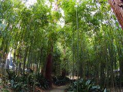 浄智寺 冬の竹林にも涼やかな風が吹く鎌倉のお札所