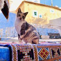 モロッコぐるっと1周の旅。2日目。猫多め。