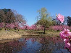 花桃とパンケーキ(古河総合公園~ウエスト珈琲ハウス)
