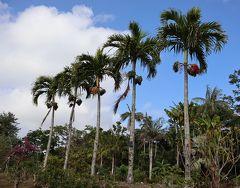 小笠原の旅・・父島の亜熱帯農業センターと扇浦海岸を散策します。