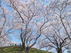 岡山市内 桜の名所めぐり