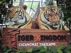 タイ・チェンマイ第三日 タイガーキングダムで虎と戯れ、ワットチェディルアンに圧倒される