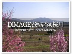 DiMAGEで巡る春の桜川