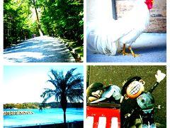 当日予約即行動の1人旅。伊勢神宮と鵜方、渡鹿野島の宿はいふう。