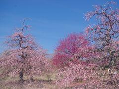 伝統の匠の技を観梅~鈴鹿の森庭園~