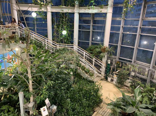 """渋谷区にも小さいですが植物園があります。今回は申し込みしていた""""桜の盆栽""""のワ-クショップがコロナウィルスの影響で中止。桜を取りに行きながら、久しぶりに渋谷ふれあい植物センターを楽しんで来ました!<br /><br />渋谷駅→渋谷郵便局→渋谷ふれあい植物センター→しぶやbridge→恵比寿ひいらぎ(たい焼き屋さん)<br /><br />#街ブラ記録"""