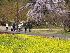 昭和記念公園 2020年3月18日