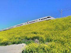 大分県・杵築市の春の名所になりそうな菜の花が好きな方や鉄道マニアの方には打ってつけの場所です(*^-^*)