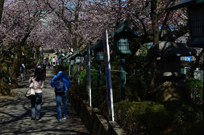 ここ、真言宗智山派・密蔵院は安行桜がとても美しいお寺です。<br />江戸時代から植木の街として関東では広く知れ渡った安行に位置しJR京浜東北線、川口駅、西川口駅よりバスで30分<br />少々不便ですが3月上旬~中旬にかけて濃いピンクの安行桜を楽しむことができます。<br />都心から半日コースのハイキングが楽しめます。