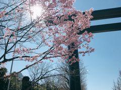 【東京さんぽ】2020年お花見 今週はまだちょっと早い
