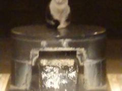 八幡浜へ友達と温泉猫