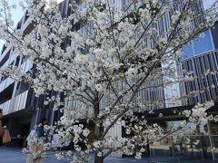 早春 神楽坂ランチ 飯田橋 周辺散歩