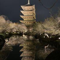 京都deコロナ封じ、御朱印、スイーツときどき観光