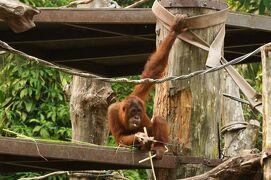 動物ずくめのシンガポールひとり旅 15 シンガポール動物園 レプトピアの部