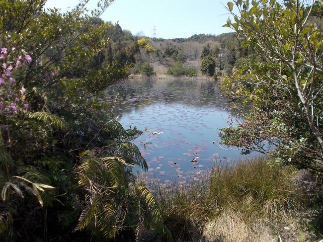 岡山県玉野市のみやま公園は、山間部につくられたいくつかの農業用ため池の周辺を公園化したもの。なかなか広大で、すべての池をめぐり歩くと3時間くらいかかります。7000本の桜が植えられている桜の名所でもあります。桜の花見にはやや遅過ぎる感のある4月9日というタイミングだったのもあってか、7000本も桜があるようには見えず、花見としては少々期待はずれでしたが、渓流沿いの遊歩道があったりしてハイキングとしては十分楽しめました。