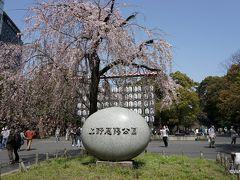 桜の時期、上野公園から浅草寺辺りを散策