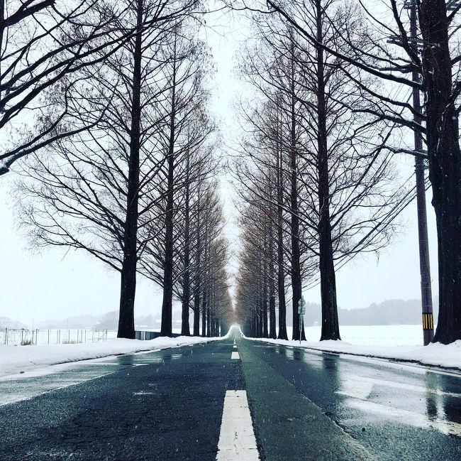 雪のメタセコイア並木道へ。<br />また琵琶湖西を車で走るとき、いつも気になっていた湖畔の鳥居へ。