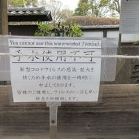 コロナで美術館も動物園も閉まり、行列のない上野公園で、そろりそろりとお花見