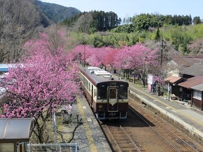今年の花桃はちょっと早いんじゃない?という情報を得て<br />わたらせ渓谷鉄道の鉄旅へ!<br /><br />