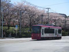 2020年3月 満開の桜(王子)