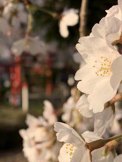 静かなお花見。今度はリアル❣️