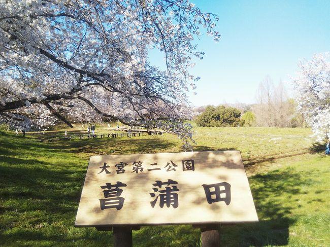 埼玉県で人気の大宮公園から<br />ゆっくり歩いて15分ほどの<br />大宮第二公園を散策しました。<br /><br />人が少なめで穴場との情報で<br />初めて行ってきました。<br /><br />巨木が多く見ごたえありました。<br /><br />※マスクにひとり歩きです。