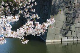 緊急事態宣言前のお花見①京都