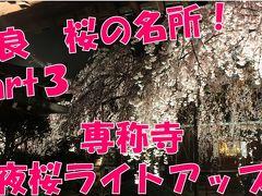 【桜の名所】専称寺 夜桜ライトアップ