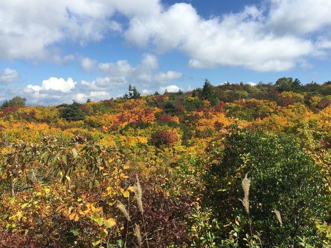 新型コロナで旅に出れないので過去の旅行記をアップする 2015年 栗駒山の紅葉