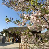 2020年3月 カナルカフェでお花見&神楽坂散歩〜靖国神社