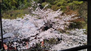 桜の季節に城戸南蔵院の寝仏を拝みに行く。
