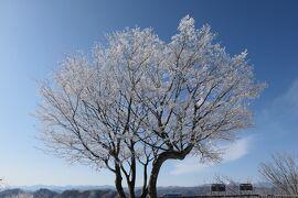 冬の軽井沢♪ Vol8 ☆軽井沢プリンススキー場 白い樹氷♪