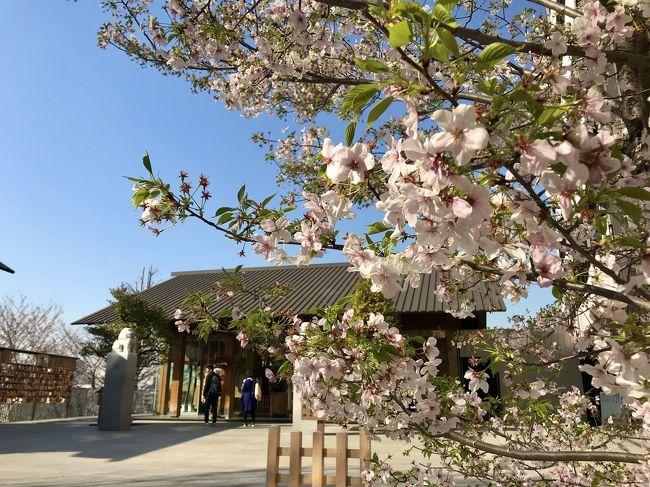 今年はコロナの影響でいつものお花見は出来そうにありません…。<br />外出自粛要請になる直前、少しでも桜を楽しみたく、飯田橋のカナルカフェでランチを。<br /><br />カナルカフェの桜は満開までに時間がかかりそうでしたが、良いお天気の中デッキでのランチはリフレッシュできました(^-^)<br /><br />その後は、御朱印もいただきながら神楽坂散歩。<br />桜が物足りなかったこともあり、最後は靖国神社まで歩いてみました!<br /><br />4月からは完全引きこもり生活です…。