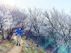 雪もないのに白い森を見に行こう/釈迦が岳