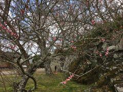 ちょっと早い春を見に  初めての丹波さかさま…いや篠山(^_^;)