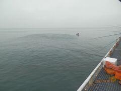 豊浜6と7と8いっそう早く家を出て豊浜釣り桟橋で釣り